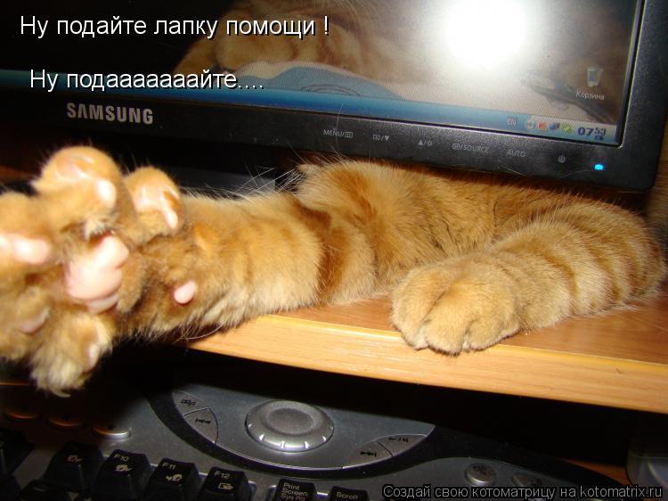 Котоматрица: Ну подайте лапку помощи ! Ну подааааааайте....