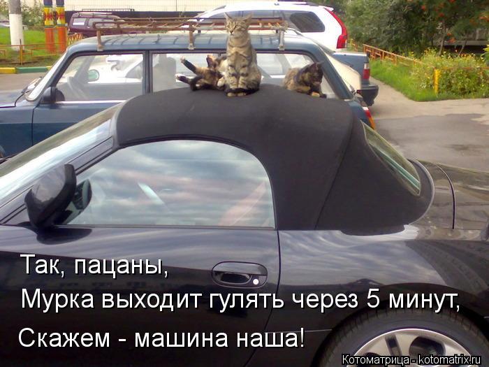 Котоматрица: Так, пацаны, Мурка выходит гулять через 5 минут, Скажем - машина наша!