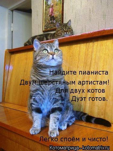 Котоматрица: Двум шерстяным артистам! Для двух котов Дуэт готов. Легко споём и чисто! Найдите пианиста