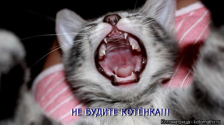 Котоматрица: НЕ БУДИТЕ КОТЁНКА!!! НЕ БУДИТЕ КОТЁНКА!!!