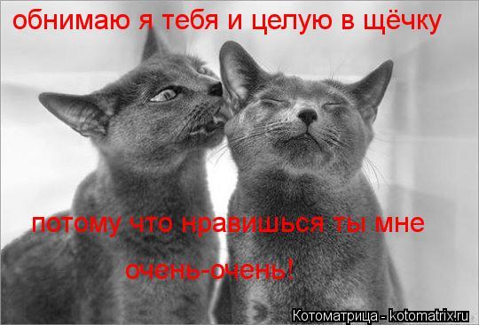 Котоматрица: обнимаю я тебя и целую в щёчку потому что нравишься ты мне очень-очень!