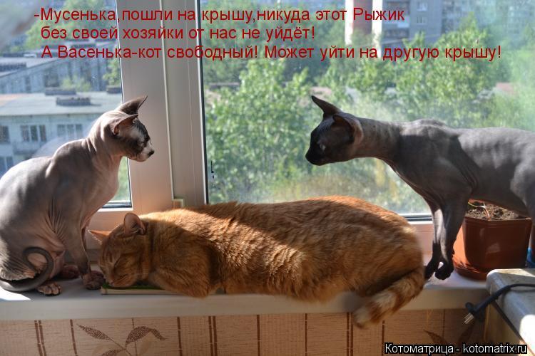 Котоматрица: -Мусенька,пошли на крышу,никуда этот Рыжик  без своей хозяйки от нас не уйдёт! А Васенька-кот свободный! Может уйти на другую крышу!