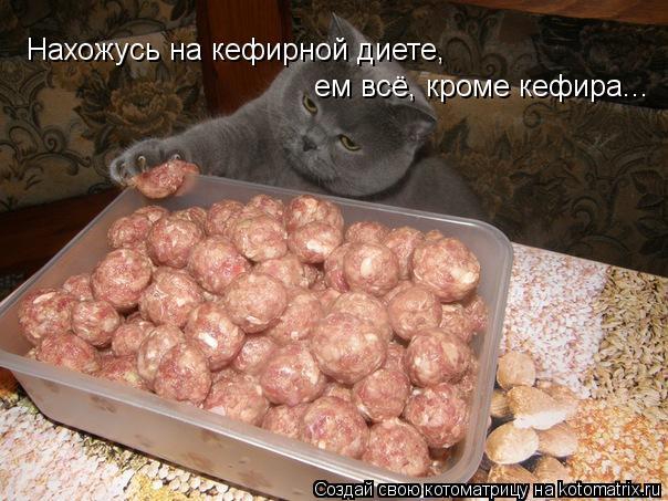 Котоматрица: Нахожусь на кефирной диете, ем всё, кроме кефира...