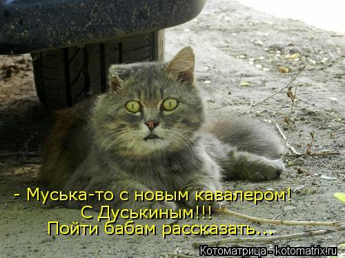 Котоматрица: - Муська-то с новым кавалером! С Дуськиным!!! Пойти бабам рассказать...