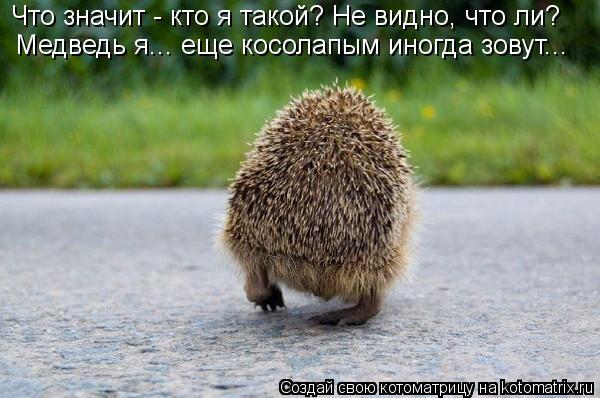 Котоматрица: Что значит - кто я такой? Не видно, что ли? Медведь я... еще косолапым иногда зовут...