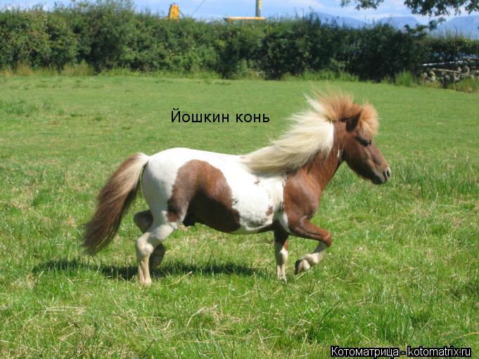 Котоматрица: Йошкин конь