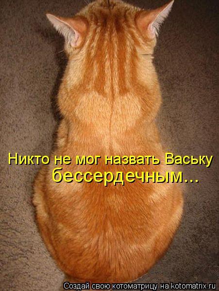 Котоматрица: Никто не мог назвать Ваську бессердечным...
