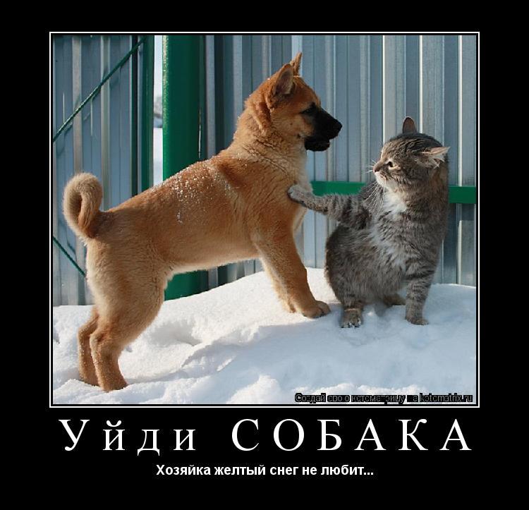 Котоматрица: Уйди СОБАКА Хозяйка желтый снег не любит...