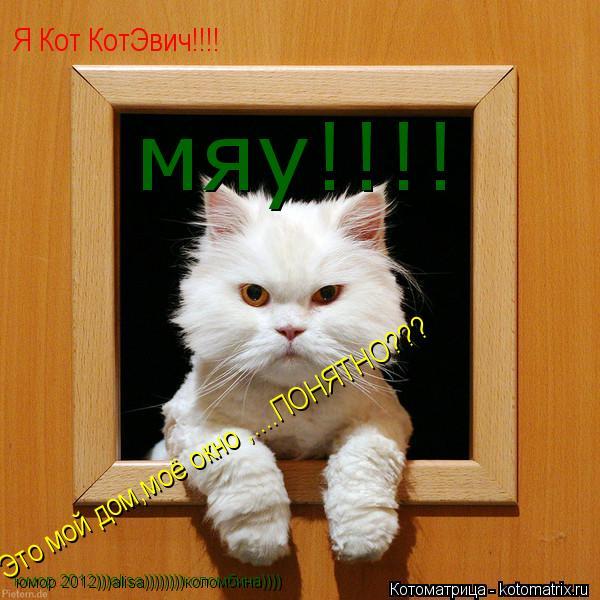 Котоматрица: Это мой дом,моё окно ,....ПОНЯТНО??? Я Кот КотЭвич!!!! юмор 2012)))alisa))))))))коломбина)))) мяу!!!!