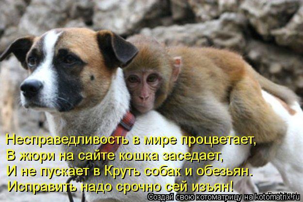 Котоматрица: Несправедливость в мире процветает, В жюри на сайте кошка заседает, И не пускает в Круть собак и обезьян. Исправить надо срочно сей изъян!