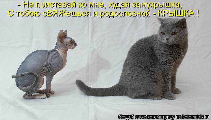 Котоматрица: - Не приставай ко мне, худая замухрышка, С тобою сВЯЖешься и родословной - КРЫШКА !