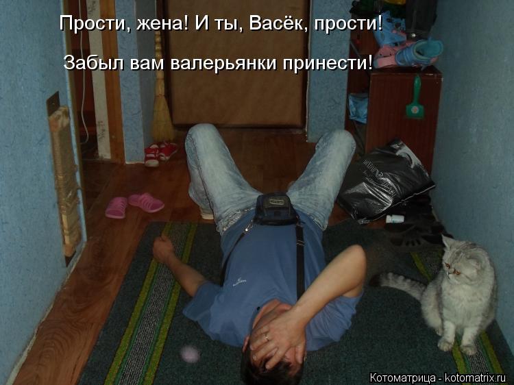 Котоматрица: Прости, жена! И ты, Васёк, прости! Забыл вам валерьянки принести!