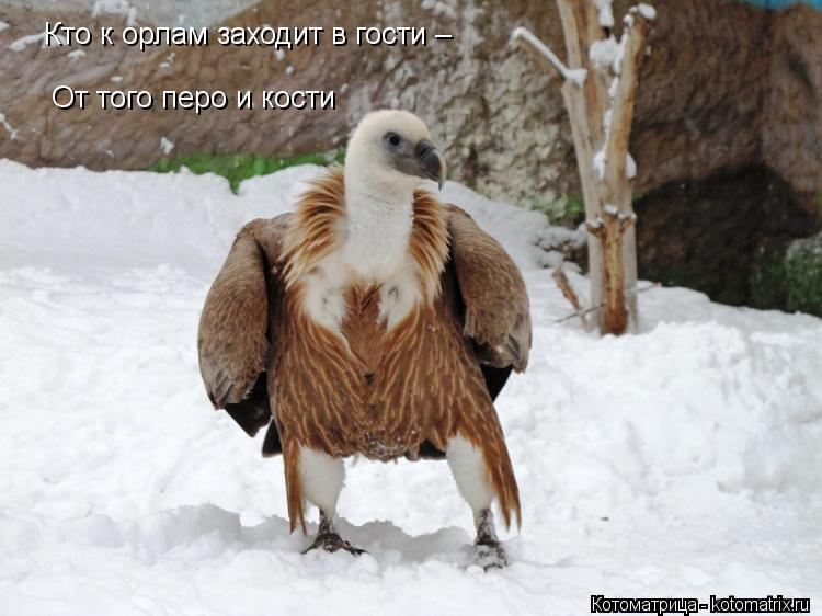 Котоматрица: Кто к орлам заходит в гости – От того перо и кости