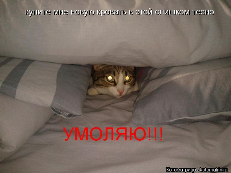 Котоматрица: купите мне новую кровать в этой слишком тесно УМОЛЯЮ!!!