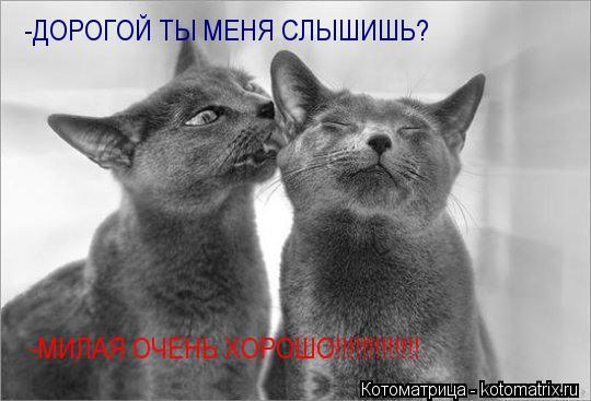 Котоматрица: -ДОРОГОЙ ТЫ МЕНЯ СЛЫШИШЬ? -МИЛАЯ ОЧЕНЬ ХОРОШО!!!!!!!!!!!!!