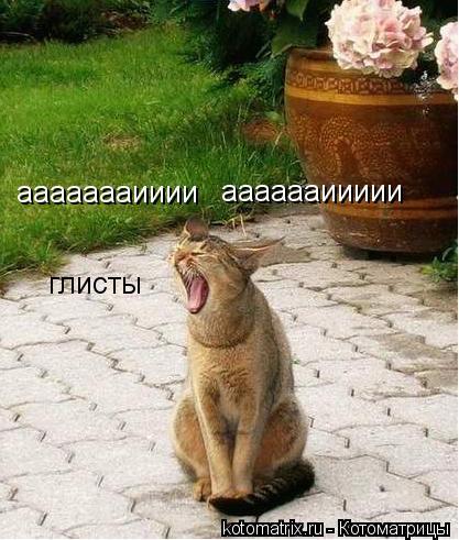 Котоматрица: аааааааииии ааааааиииии глисты