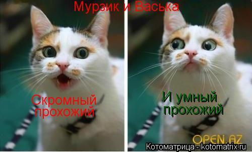 Котоматрица: Мурзик и Васька Скромный прохожий И умный  прохожий