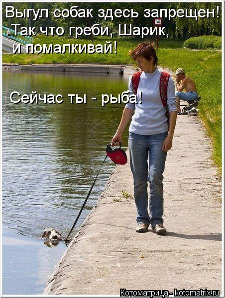Котоматрица: Выгул собак здесь запрещен! Так что греби, Шарик, и помалкивай! Сейчас ты - рыба!