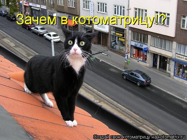 Котоматрица: Зачем в котоматрицу!?