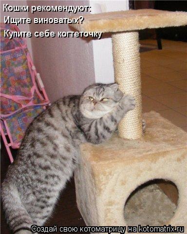 Котоматрица: Кошки рекомендуют: Ищите виноватых? Купите себе когтеточку