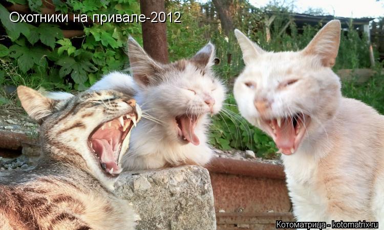 Котоматрица: Охотники на привале-2012