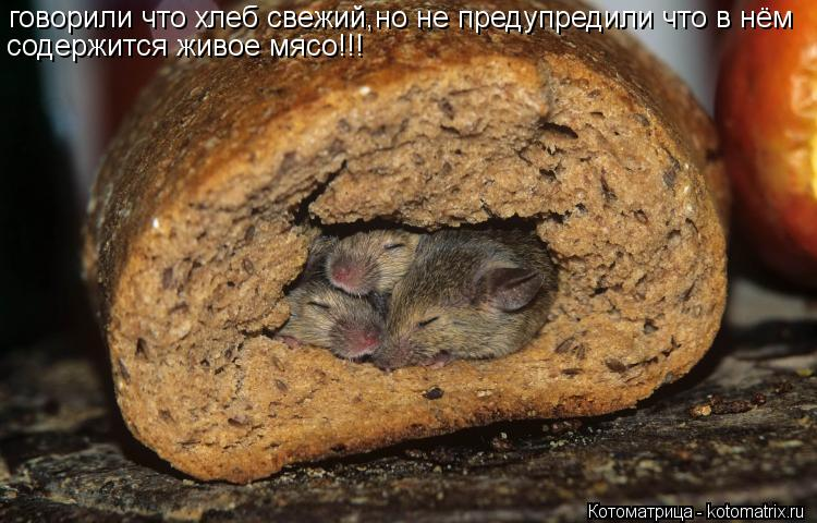 Котоматрица: говорили что хлеб свежий,но не предупредили что в нём содержится живое мясо!!!