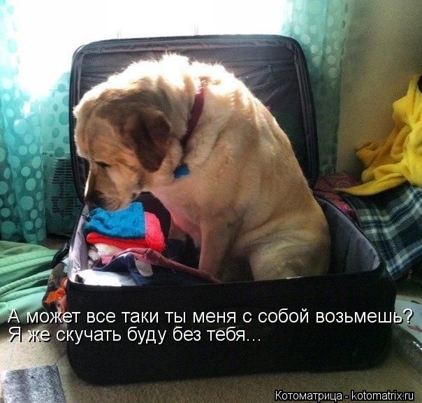 Котоматрица: А может все таки ты меня с собой возьмешь? Я же скучать буду без тебя...