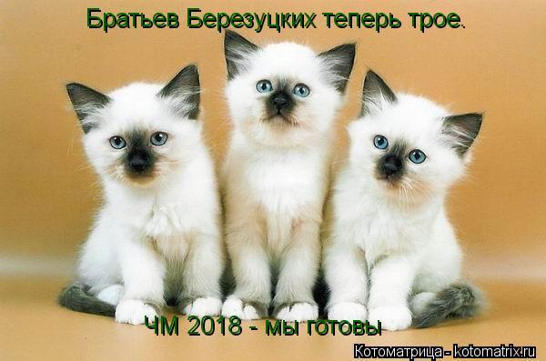 Котоматрица: Братьев Березуцких теперь трое. ЧМ 2018 - мы готовы