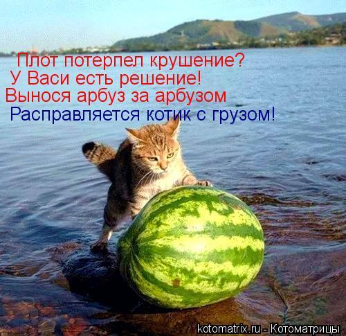 Котоматрица: Плот потерпел крушение? У Васи есть решение! Вынося арбуз за арбузом Расправляется котик с грузом!