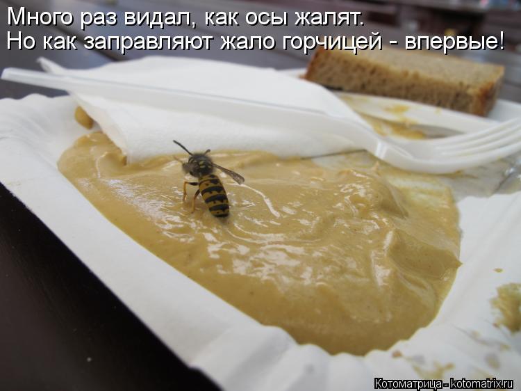 Котоматрица: Много раз видал, как осы жалят.  Но как заправляют жало горчицей - впервые!