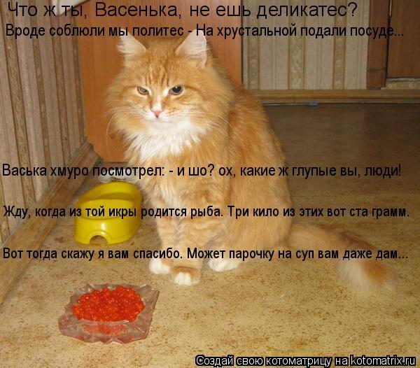 Котоматрица: Что ж ты, Васенька, не ешь деликатес?  Вроде соблюли мы политес - На хрустальной подали посуде... Васька хмуро посмотрел: - и шо? ох, какие ж глуп