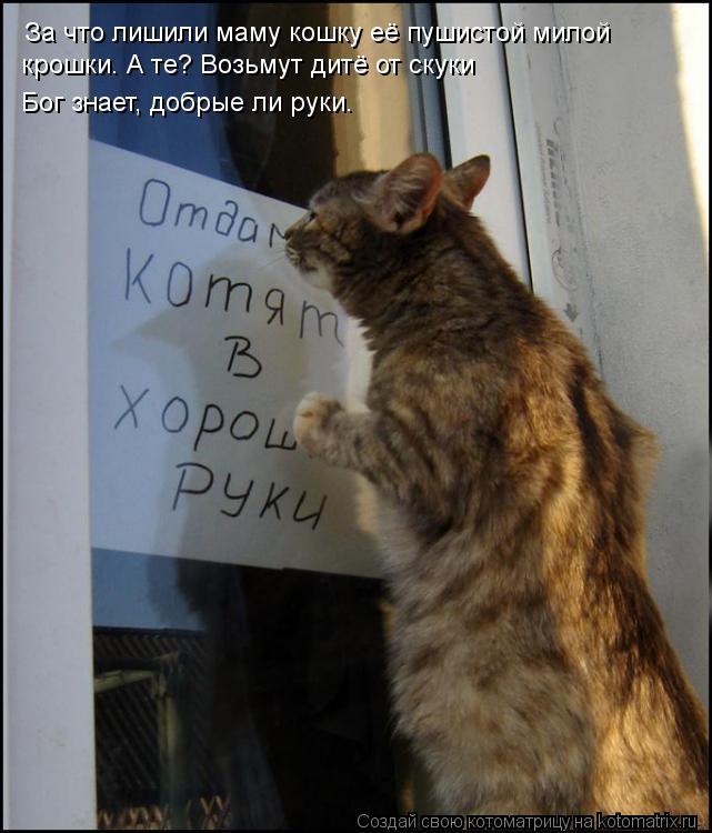 Котоматрица: За что лишили маму кошку её пушистой милой  крошки. А те? Возьмут дитё от скуки Бог знает, добрые ли руки.