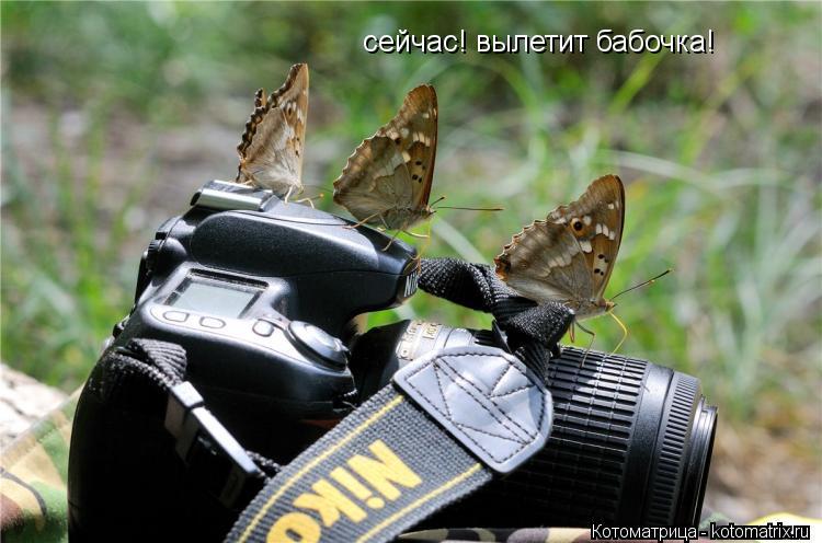 Котоматрица: сейчас! вылетит бабочка!
