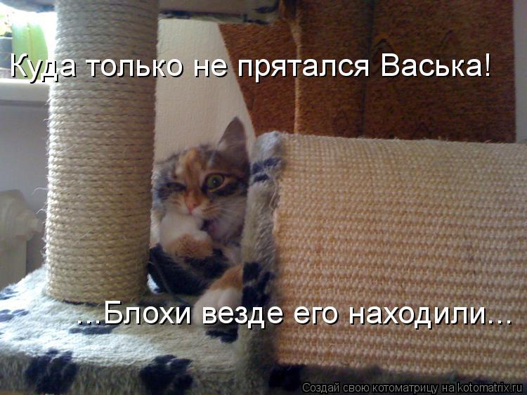 Котоматрица: Куда только не прятался Васька! ...Блохи везде его находили...