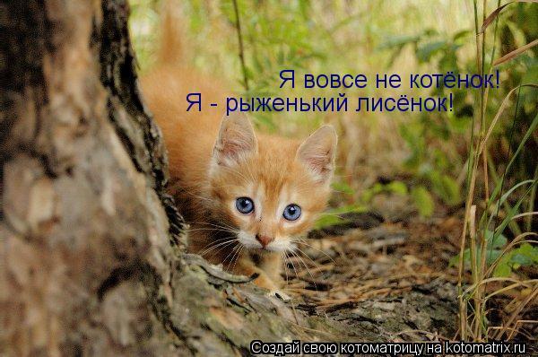 Котоматрица: Я вовсе не котёнок! Я - рыженький лисёнок!