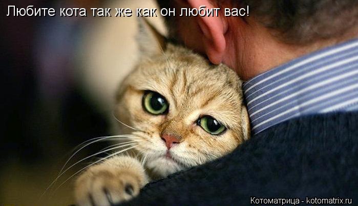 Котоматрица: Любите кота так же как он любит вас!
