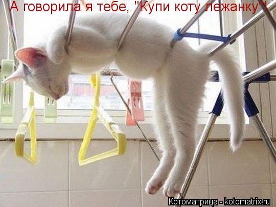 "Котоматрица: А говорила я тебе, ""Купи коту лежанку""!"