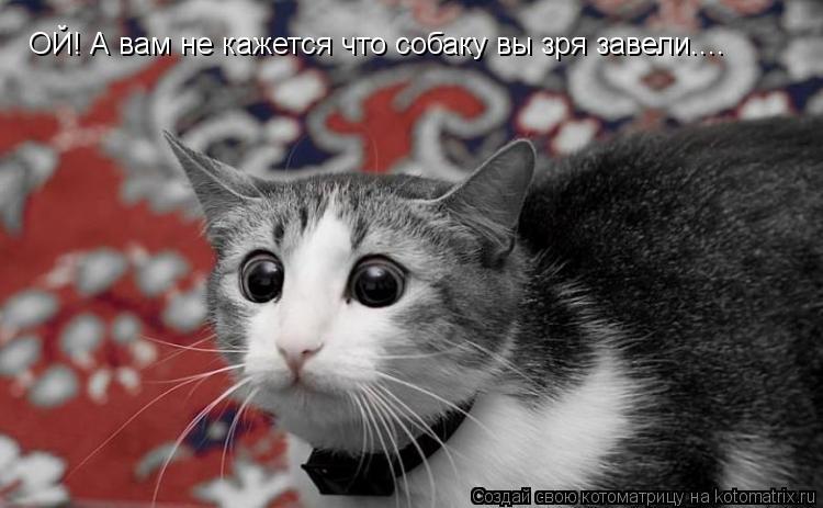 Котоматрица: ОЙ! А вам не кажется что собаку вы зря завели....