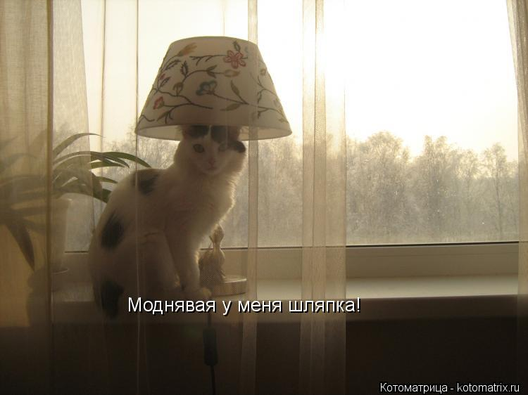 Котоматрица: Моднявая у меня шляпка!