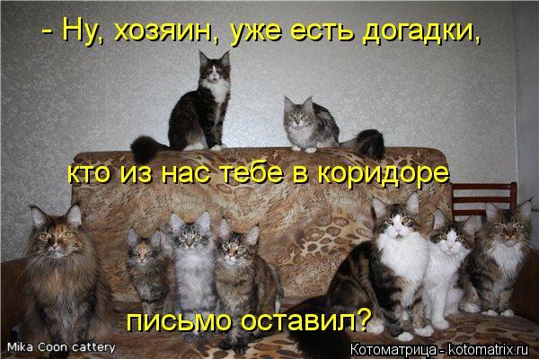 Котоматрица: - Ну, хозяин, уже есть догадки, кто из нас тебе в коридоре письмо оставил?