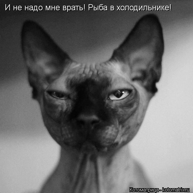 Котоматрица: И не надо мне врать! Рыба в холодильнике!