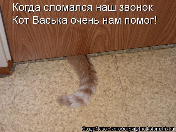 Котоматрица: Когда сломался наш звонок  Кот Васька очень нам помог!