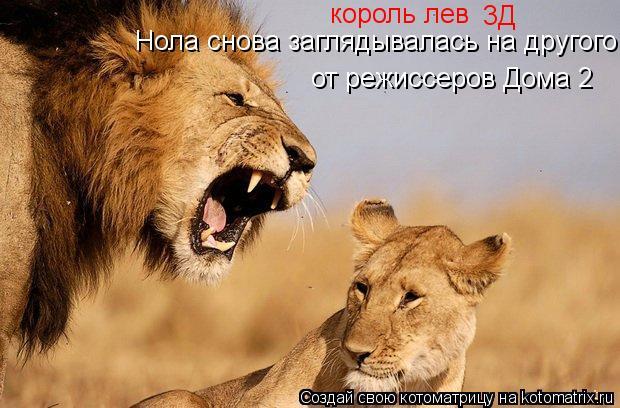 Котоматрица: король лев 3Д Нола снова заглядывалась на другого от режиссеров Дома 2