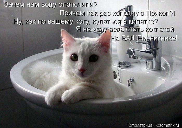 Котоматрица: Ну, как по вашему коту, купаться в кипятке? Я не хочу ведь стать котлетой, На ВАШЕМ пикнике! Зачем нам воду отключили? Причём,как раз холодную,