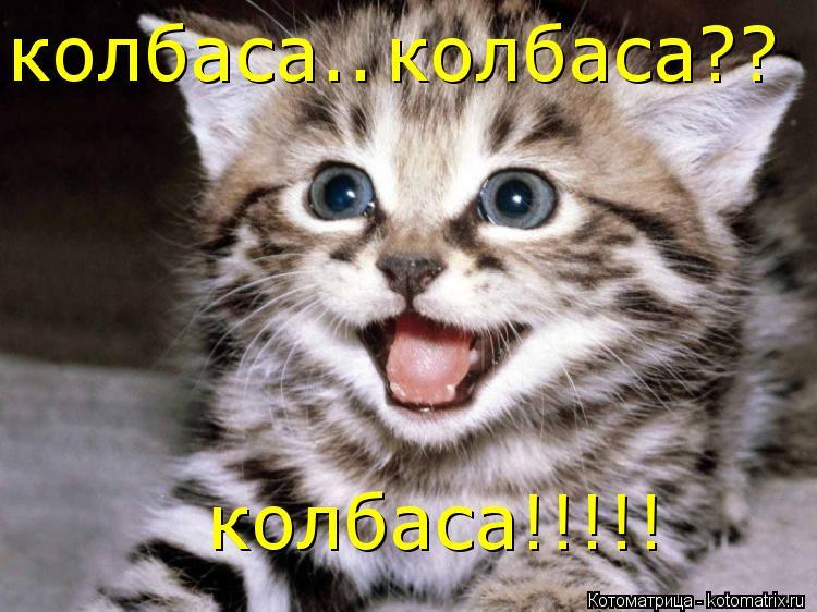 Котоматрица: колбаса.. колбаса?? колбаса!!!!!