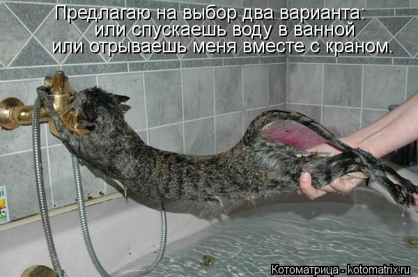 Котоматрица: Предлагаю на выбор два варианта: или спускаешь воду в ванной или отрываешь меня вместе с краном.