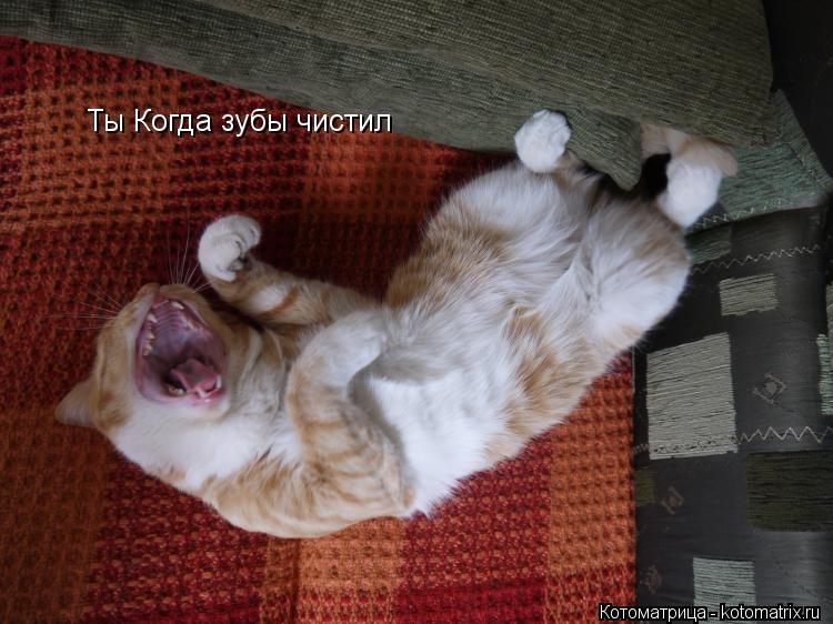 Котоматрица: Ты Когда зубы чистил