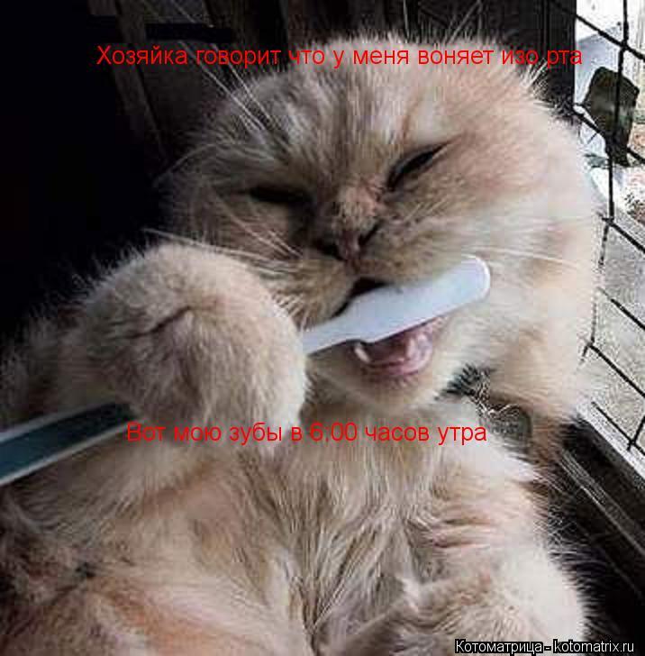 Котоматрица: Хозяйка говорит что у меня воняет изо рта Вот мою зубы в 6:00 часов утра