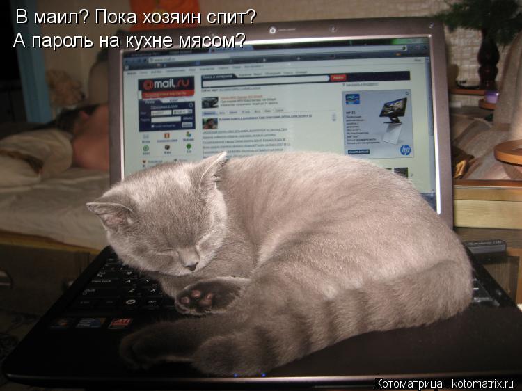 Котоматрица: В маил? Пока хозяин спит? А пароль на кухне мясом?