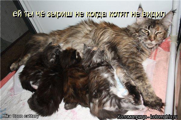 Котоматрица: ей ты чё зыриш не когда котят не видил ей ты чё зыриш не когда котят не видил ей ты чё зыриш не когда котят не видил